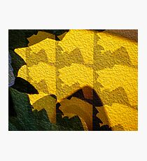 Leaf Shadow Photographic Print