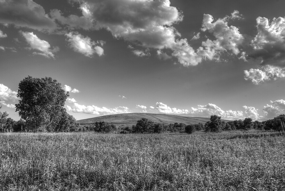 Field of Tranquility by Adam Kuehl