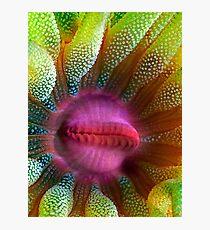 Cup Coral Portrait Photographic Print