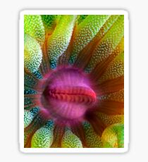 Cup Coral Portrait Sticker