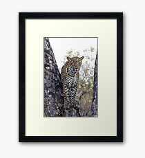 Looking For My Daughter Framed Print
