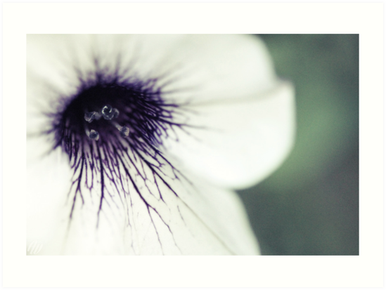 Macro Photography - Flowers by WilsonClairAmy