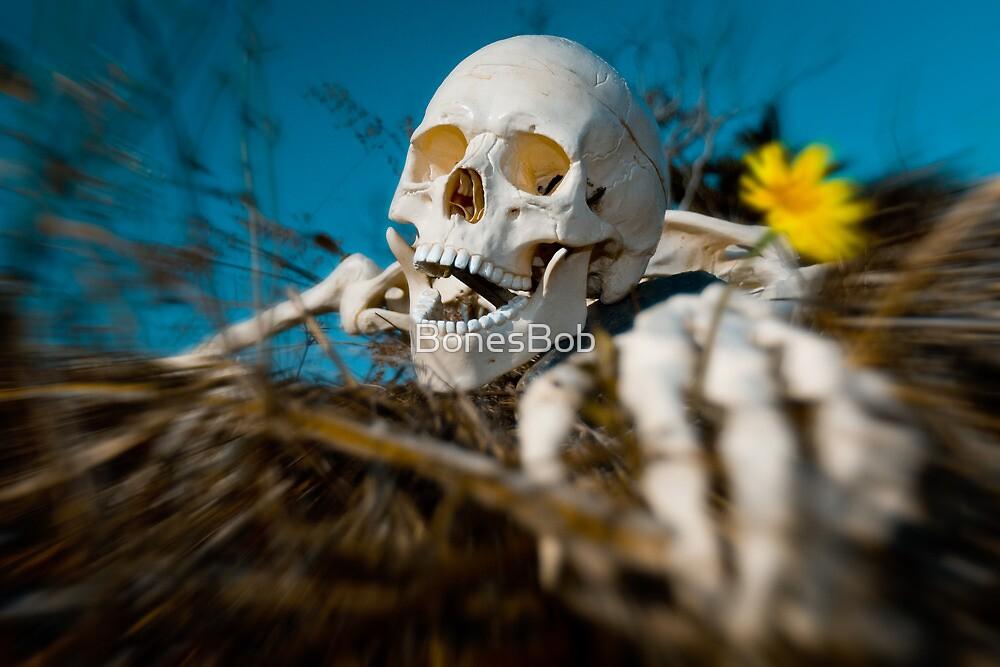 The Daisy Pusher by BonesBob