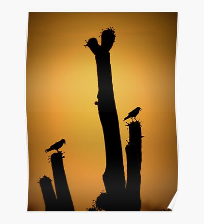 Saguaro Snack at Sunset Silhoutte Poster