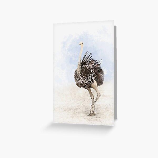 Avestruz Tarjetas de felicitación