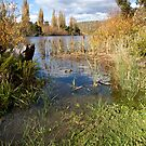 Among the Reeds - Derwent Valley, Tasmania by clickedbynic