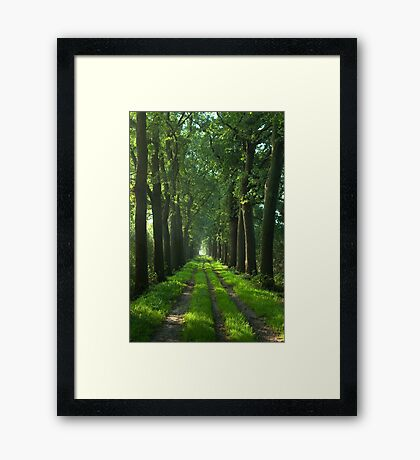 Oaks Lane  Framed Print