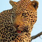 Kashane up close and personal! by jozi1