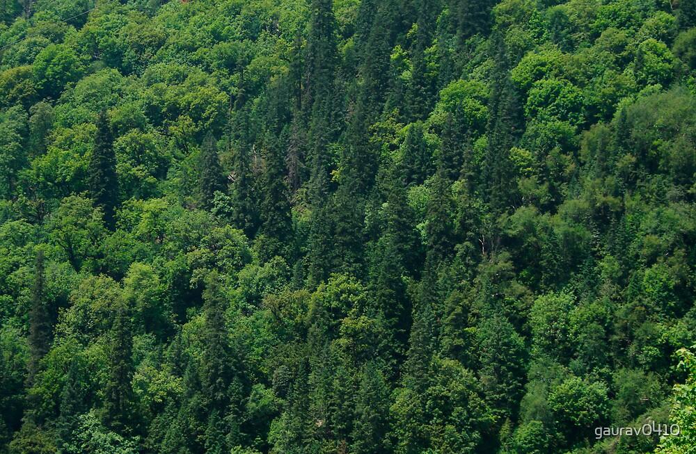 Nature Pattern on Palms by gaurav0410