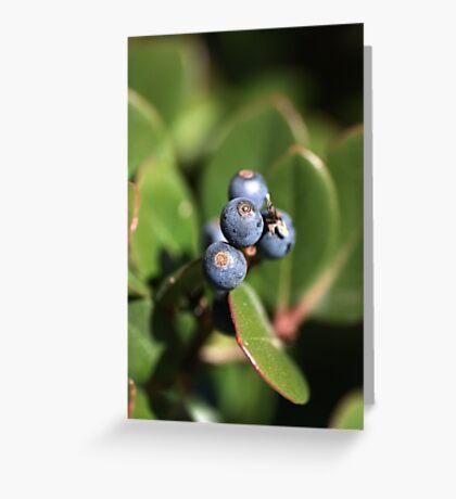 Berries of Blue Greeting Card