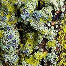 Lichens on a Tree by Sheri Nye