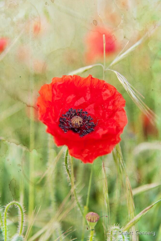 Poppy by Stuart  Gennery