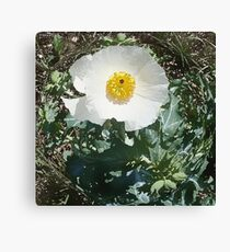 CO Wildflowers 2 Canvas Print
