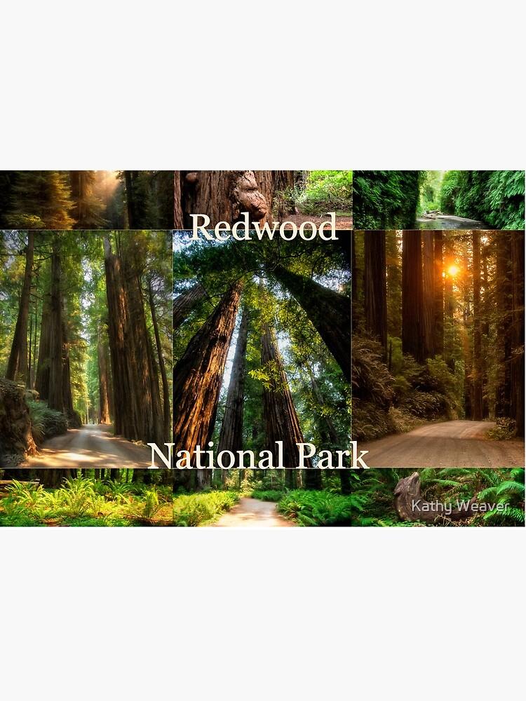 Explore Redwood National Park - CA by kdxweaver