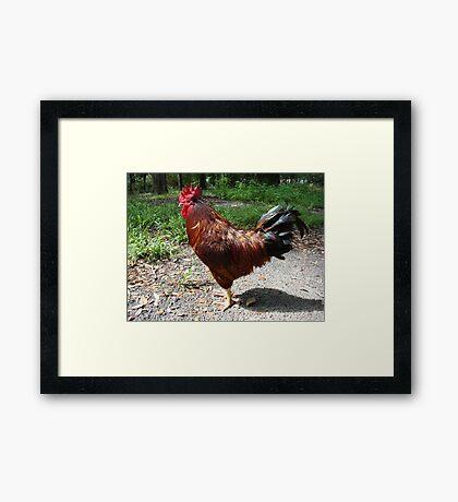 ANDRE' MY GIANT Framed Print