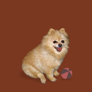 Pomeranian Dog with Ball by DeloresKnowles