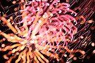fireworks 6/12/15 by david gilliver