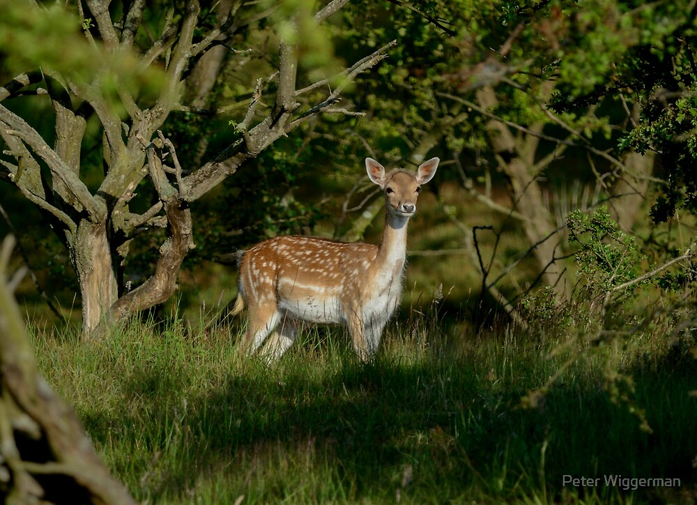 I am not Bambi !! by Peter Wiggerman