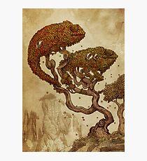Autumn Chameleons Photographic Print