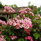 Cottage Roses by WildestArt