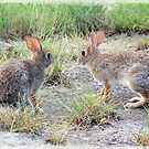 Texas Cottontail * Rabbit by Penny Odom