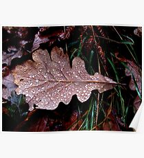 Oak leaf in the rain. Poster