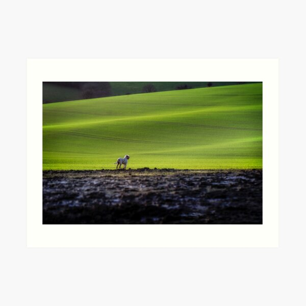 Out here alone Spinone Art Print