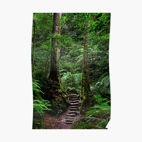 Sentinel Trees, Rodriguez Pass Stairway Poster