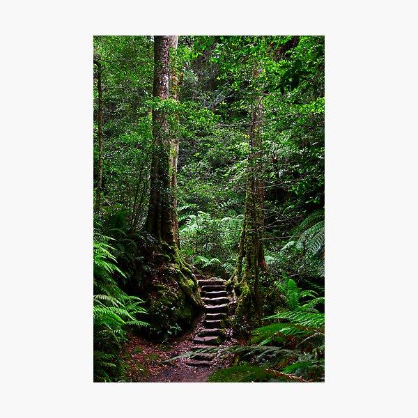 Sentinel Trees, Rodriguez Pass Stairway Photographic Print