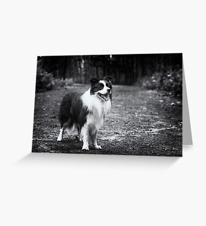 Forest Dog (Joker) Greeting Card