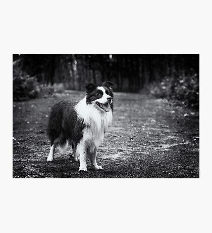 Forest Dog (Joker) Photographic Print