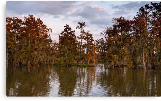 Swamp at Sunrise, Lake Martin, Breaux Bridge, Louisiana by Paul Wolf