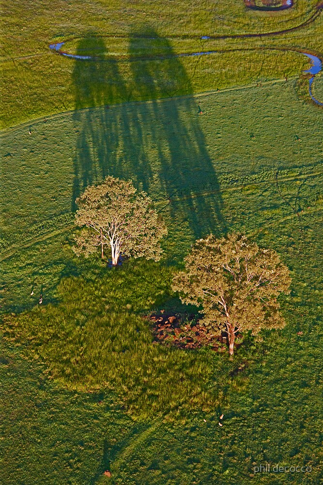 Tree Shadows by phil decocco
