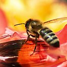 Shoo Bee Do! by Kenneth Haley
