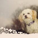 Puppy Dog in Window by jamieleigh