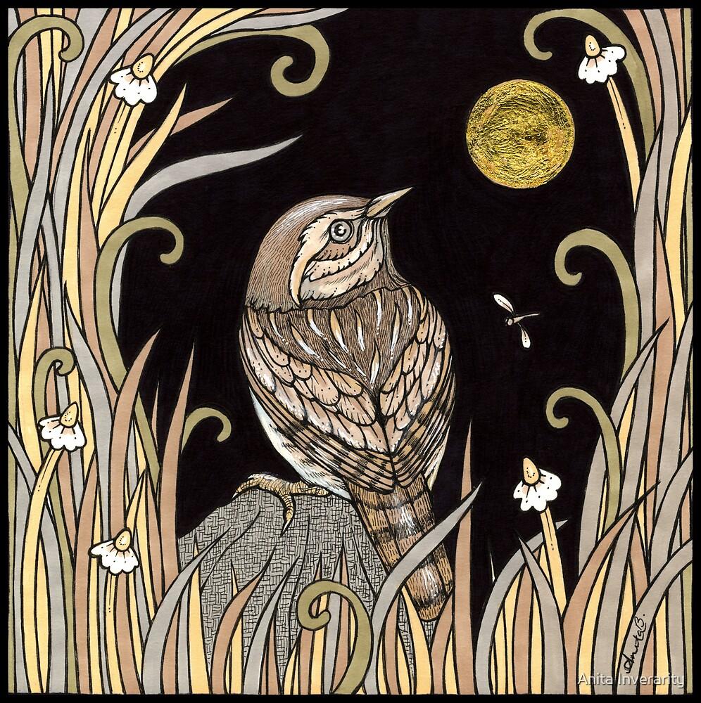 Hiding Wren by Anita Inverarity