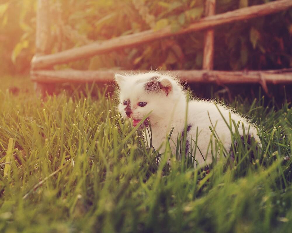 Kitten by jamieleigh