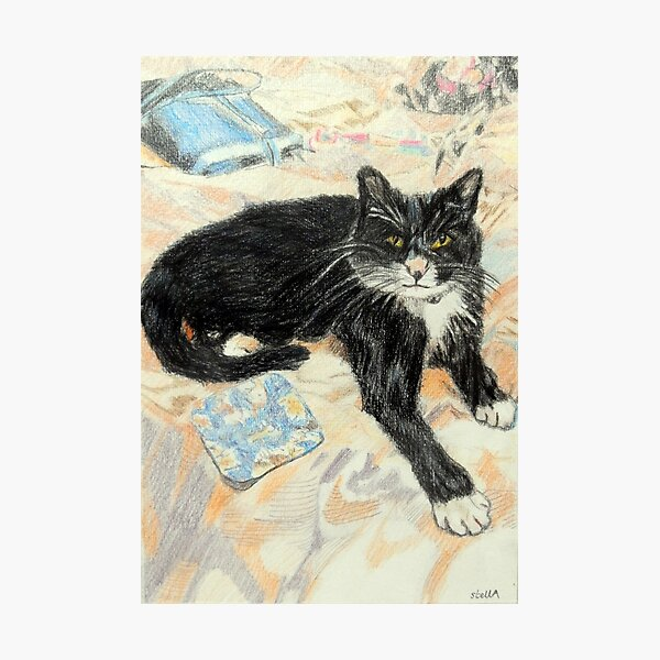The black and white cat Photographic Print