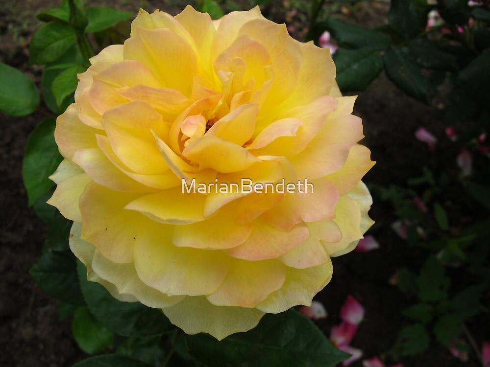 Golden Glow Rose by MarianBendeth