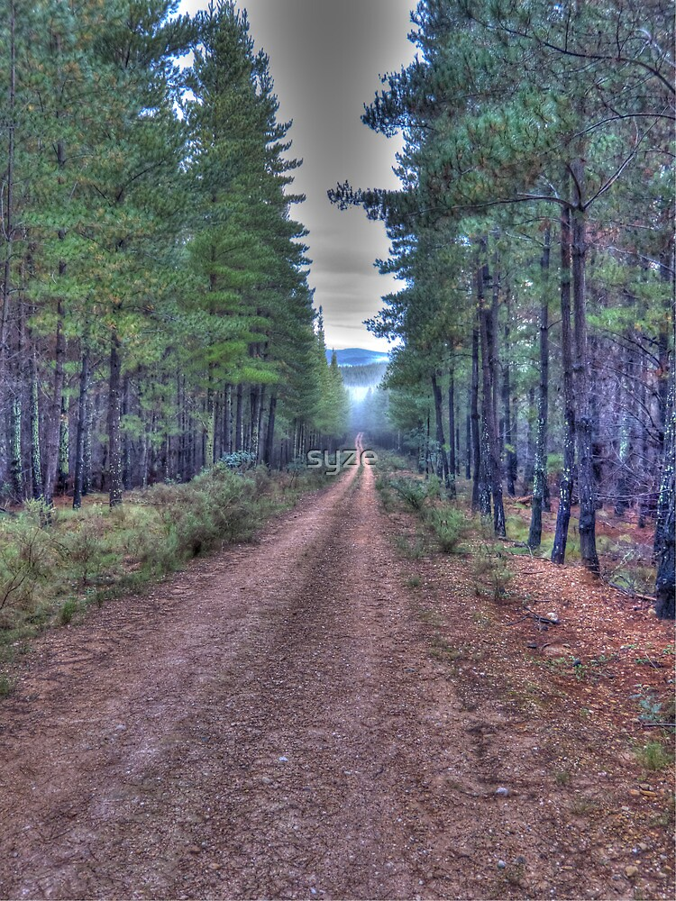 HDR Forest Road by syze