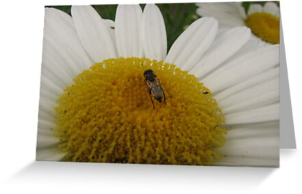 Bee in the Middle by PicsbyJody