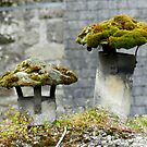 Mosses on the roof by hans p olsen