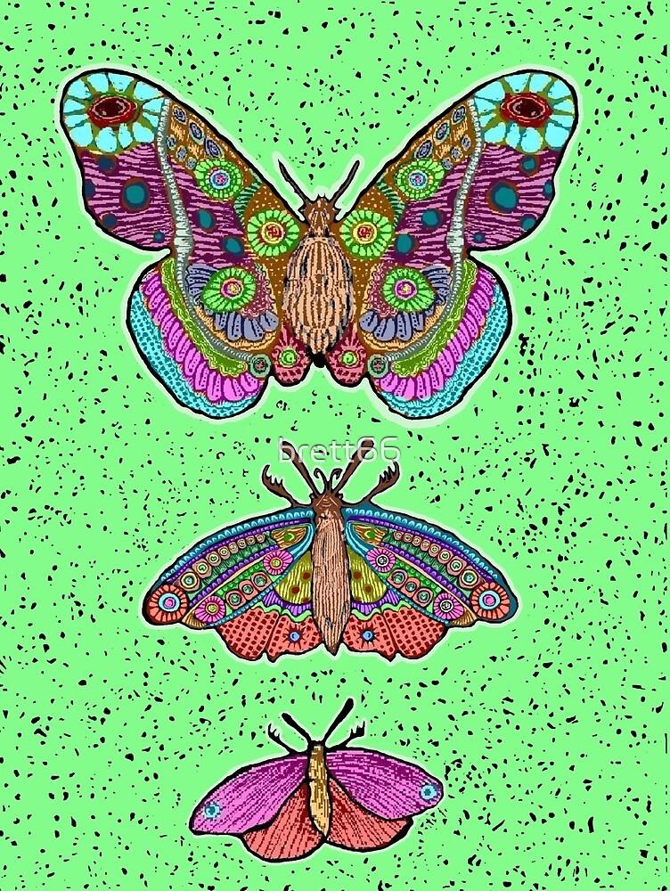 Moths only butterflies by brett66