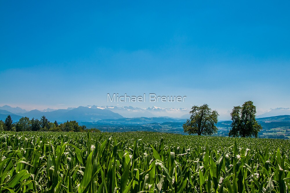 Looking over a cornfield to the Swiss Alps by Michael Brewer