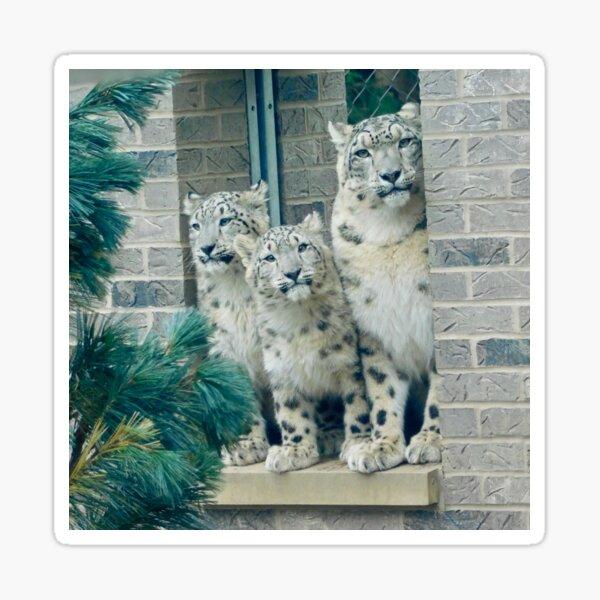 Snow Leopard Family Sticker