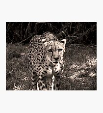 grayscale stray Photographic Print