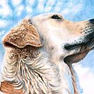 Golden Retriever Sky by Nicole Zeug