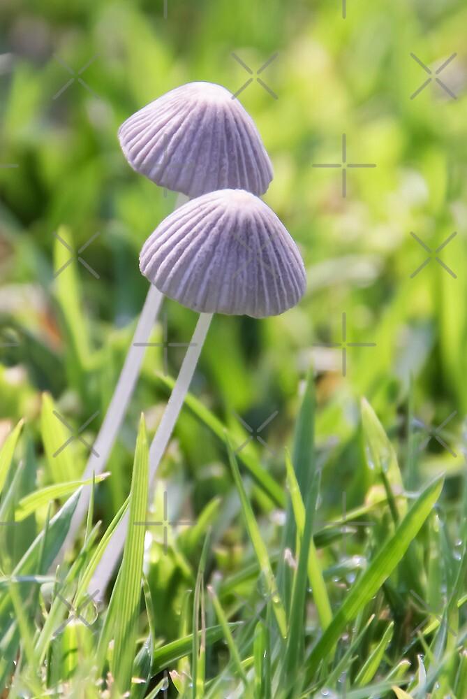 Magic Mushrooms? by Heather Friedman