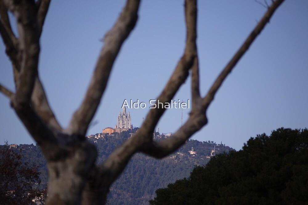 Barcelona, the Tibidabo between branches by Aldo Shaltiel