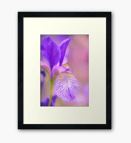Iris in Pastel Framed Print